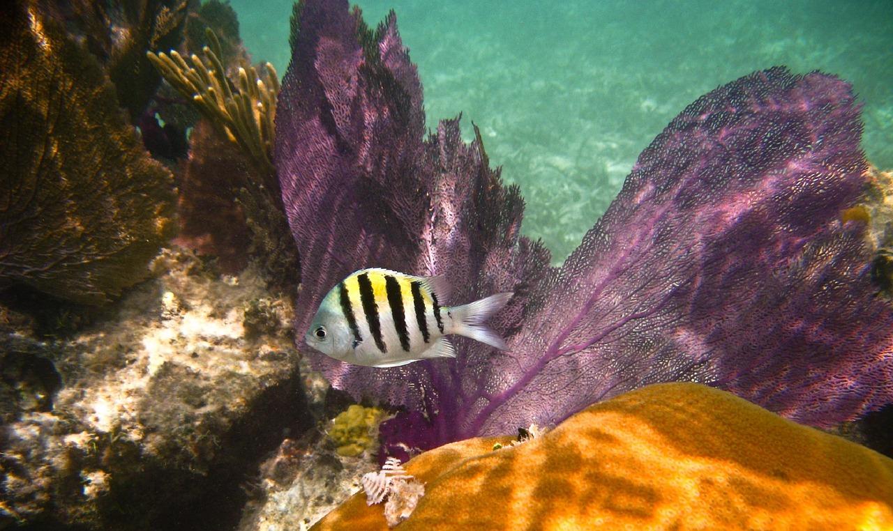Dry Tortugas National Park Pixabay Public Domain