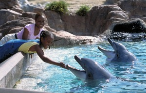 Girls Feeding Dolphins