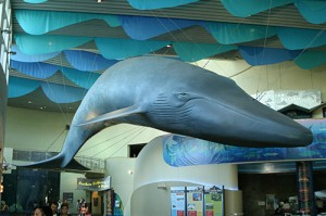 Whale in the Great Hall