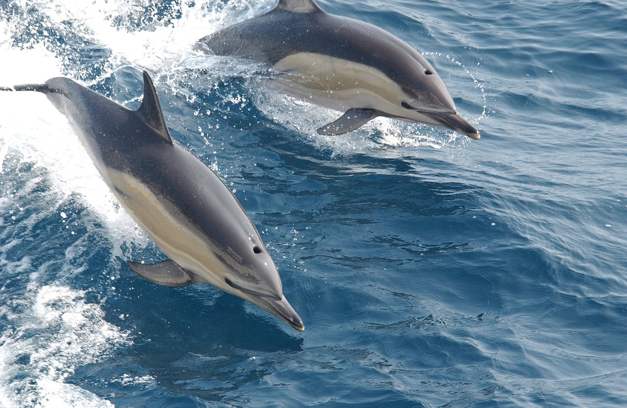 Dolphin Quest Hawaii Group Tours