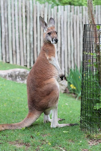 Nashville Zoo Pixabay Public Domain
