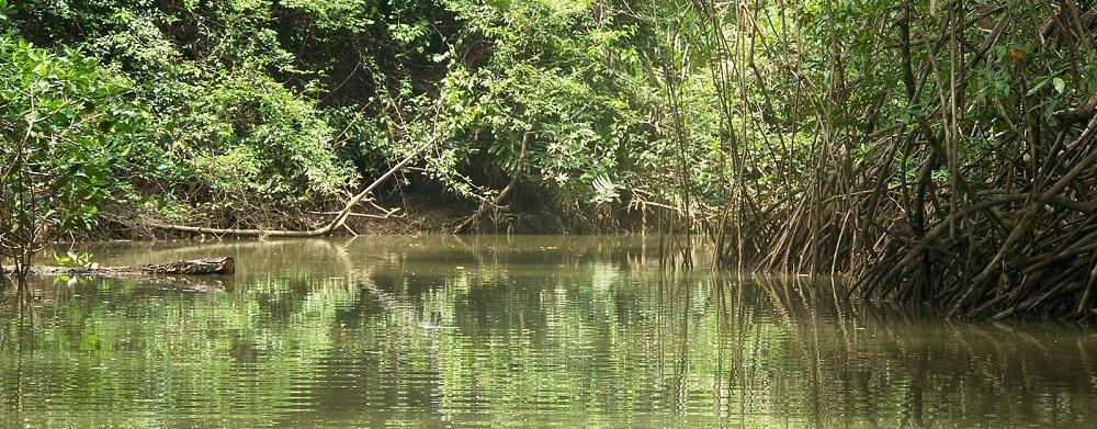 Damas_Island_Mangrove_Estuary