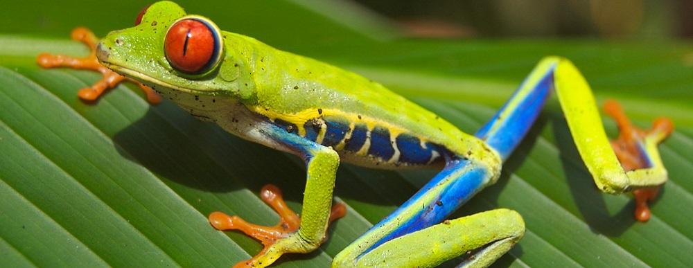 IMBio Parque Costa Rica
