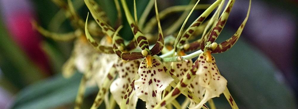 Orchid Garden Monteverde Costa Rica