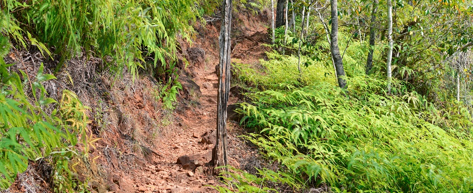 Hiking trail towards Ben's Bluff view point in Cockscomb Basin Wildlife Sanctuary, Stann Creek, Belize