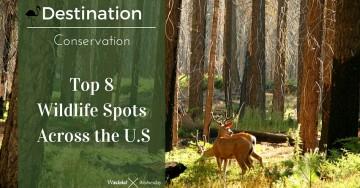 Top 8 Wildlife Spots Across the U.S