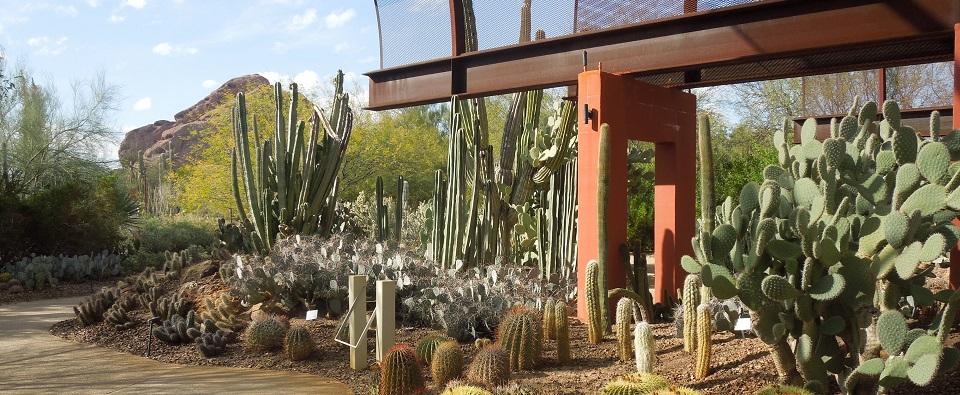 Desert_Botanical_Garden_Phoenix_Arizona_51