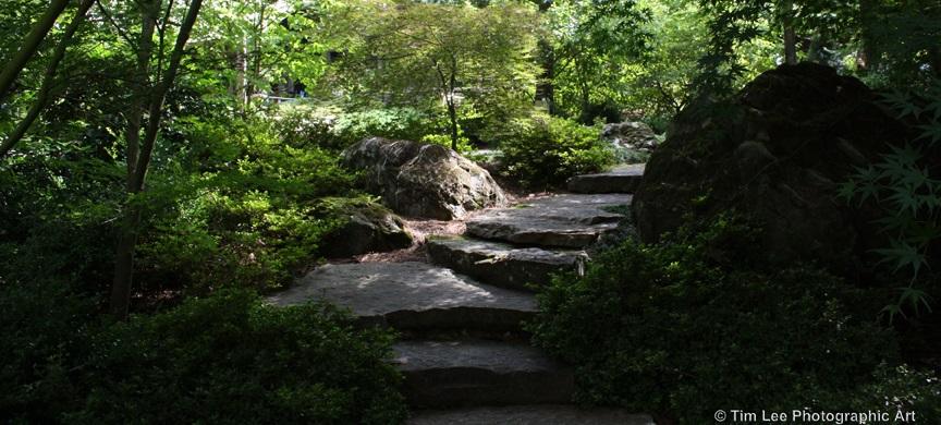 Garvan_Woodland_Gardens'_Japanese_Garden