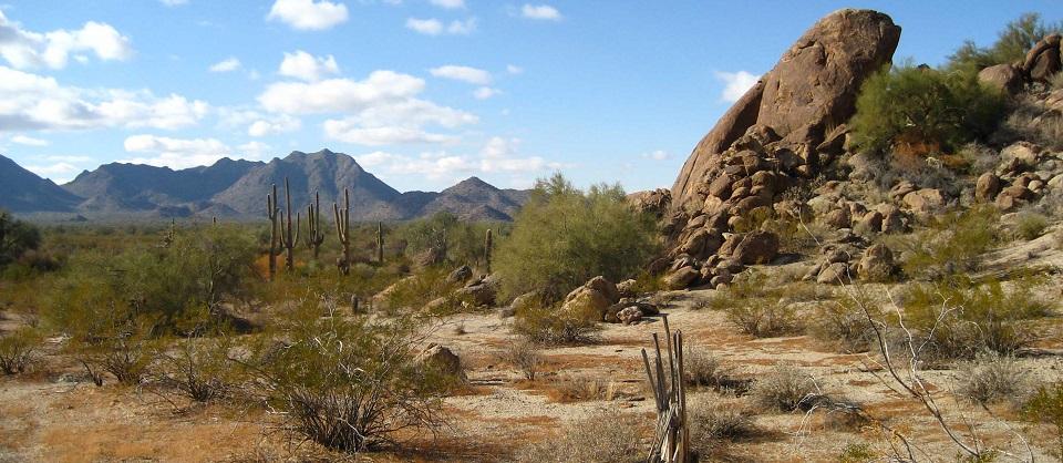 Sonoran_Desert_33.081359_n112.431507