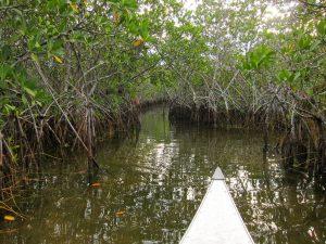Everglades, Florida photo by Miguel Vieira