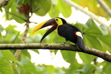 Costa Rica Rainforest Pixabay Public Domain