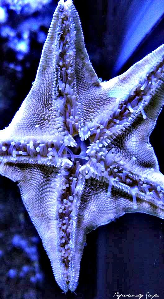 Aquarium Shot Credit Danielle Breshears Profresh
