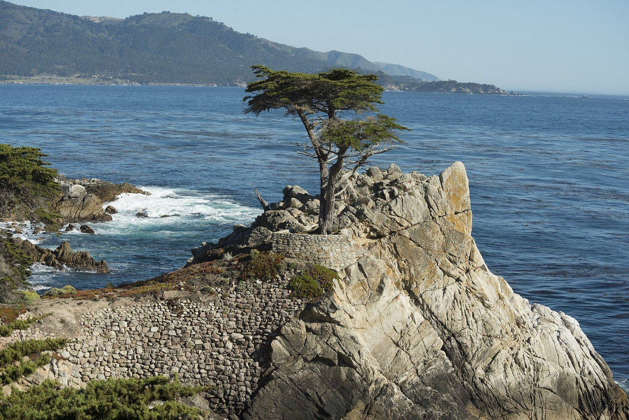 The Lone Cypress - Pixabay - Public Domain