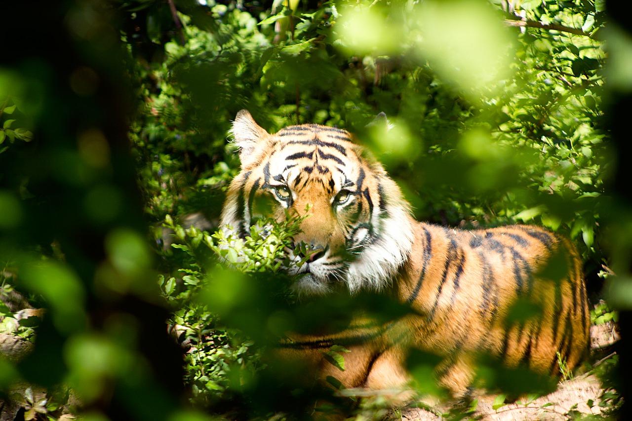 Atlanta Zoo Pixabay Public Domain