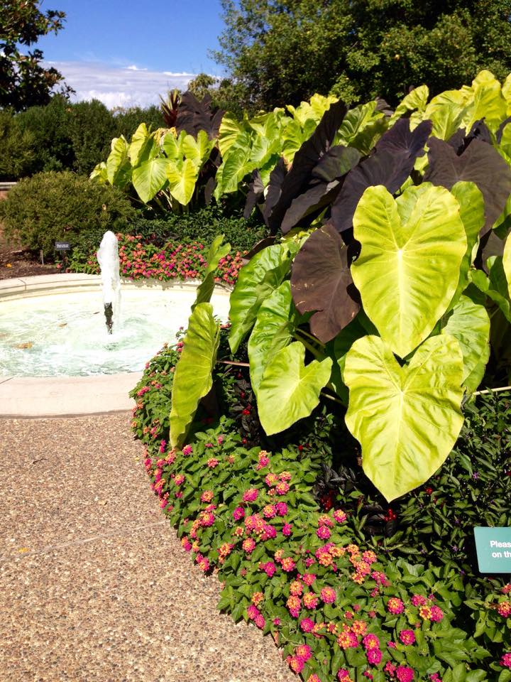 Missouri Botanical Gardens Credit Danielle Bopp