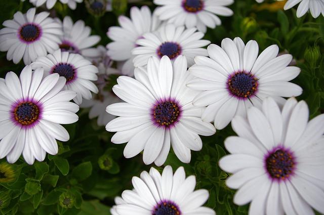 Dallas Botanical Garden Pixabay Public Domain