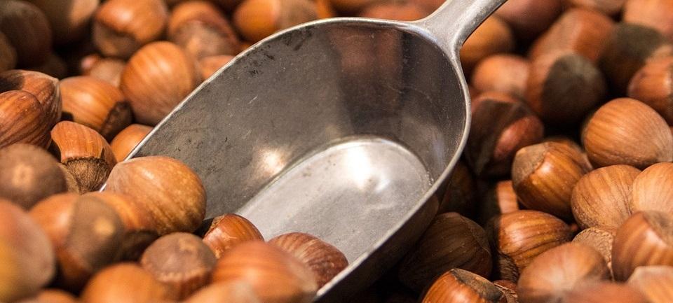 Hazelnuts Oregon Orchard