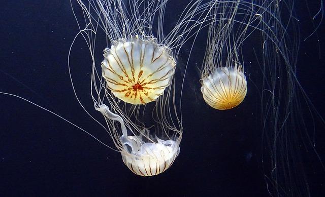 Aquarium of the Bay Pixabay Public Domain