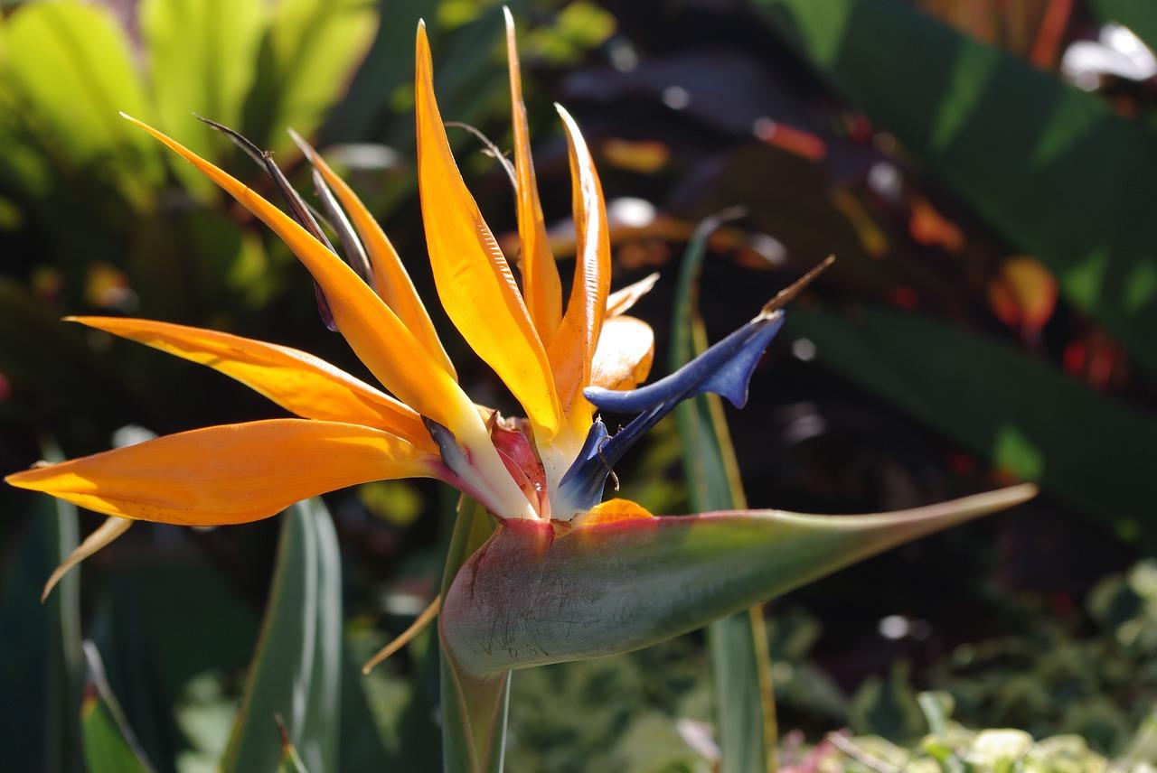 Hawaiian Flora Pixabay Public Domain