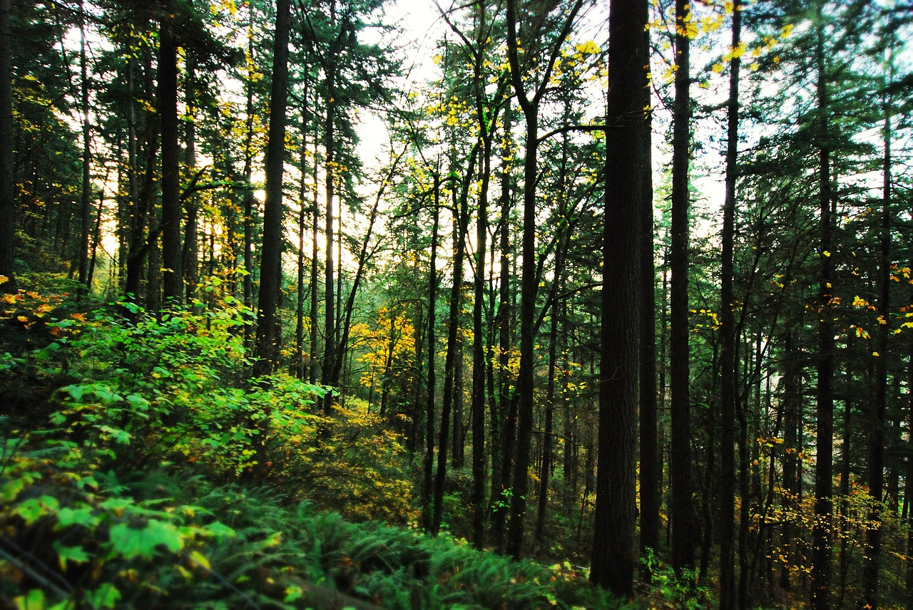 Forest Portland Oregon Pixabay Public Domain