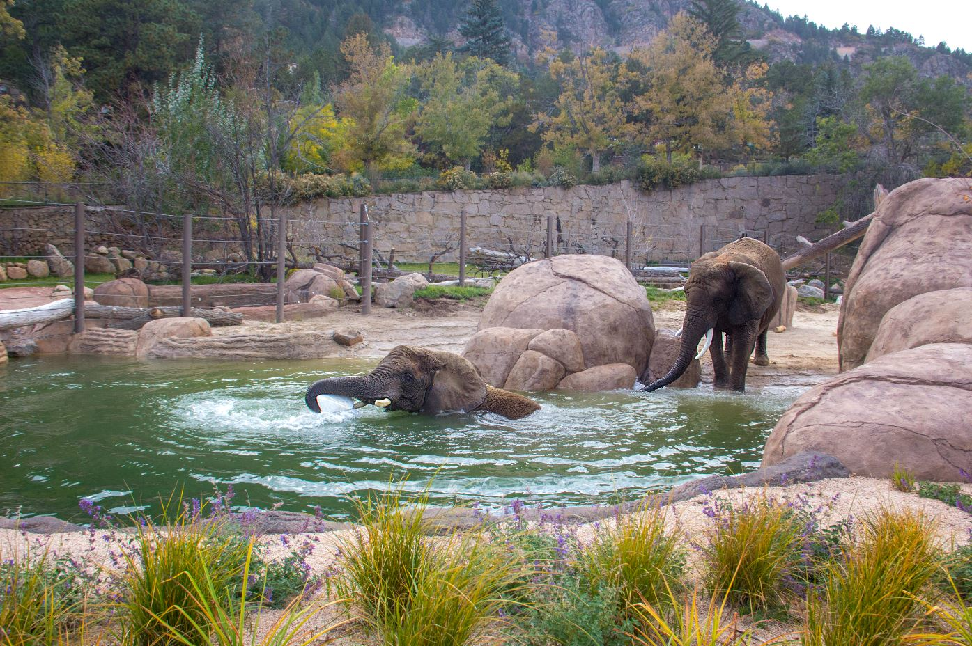 Elephant Pool Credit Cheyenne Mountain Zoo