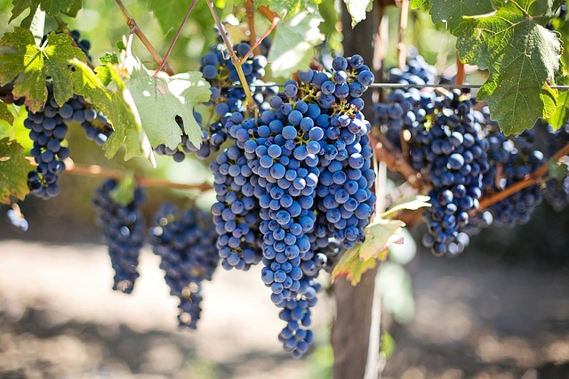 Napa Valley Pixabay Public Domain