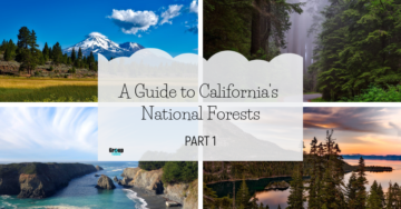 A Guide to California's National Forests: Part 1