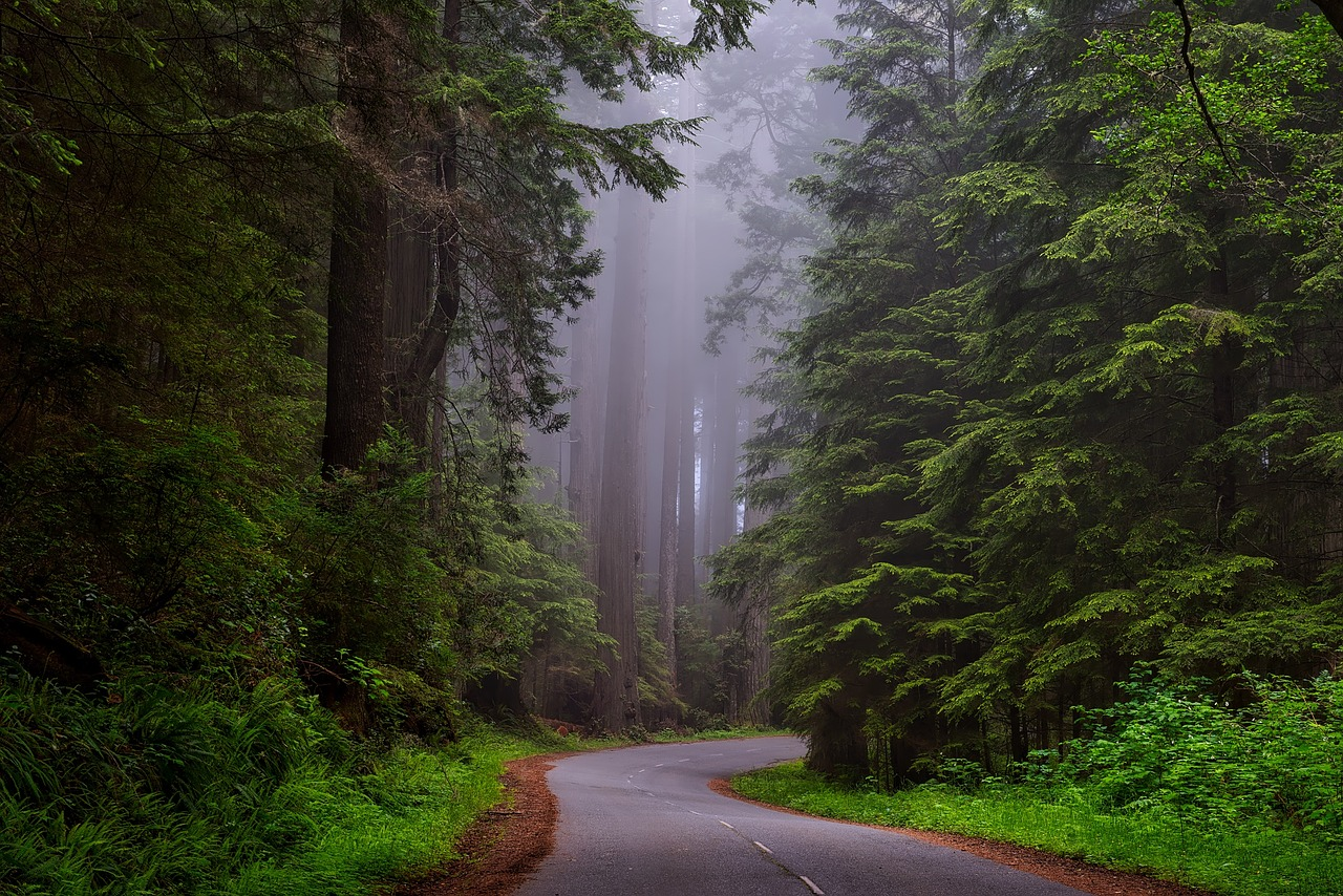 Redwood National Park Pixabay Public Domain