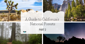 A Guide to California's National Forests: Part 2