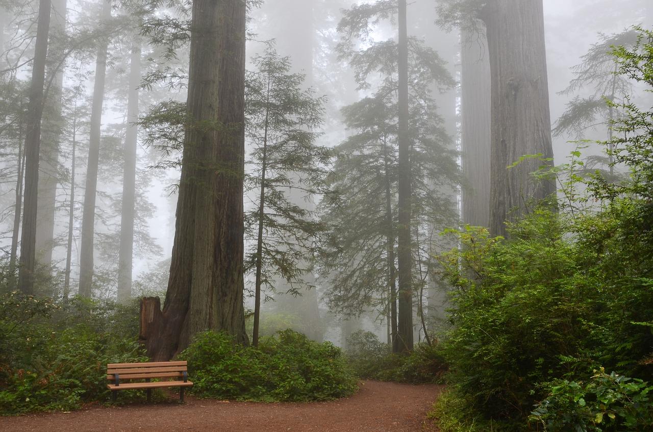 Sequoia National Park Pixabay Public Domain