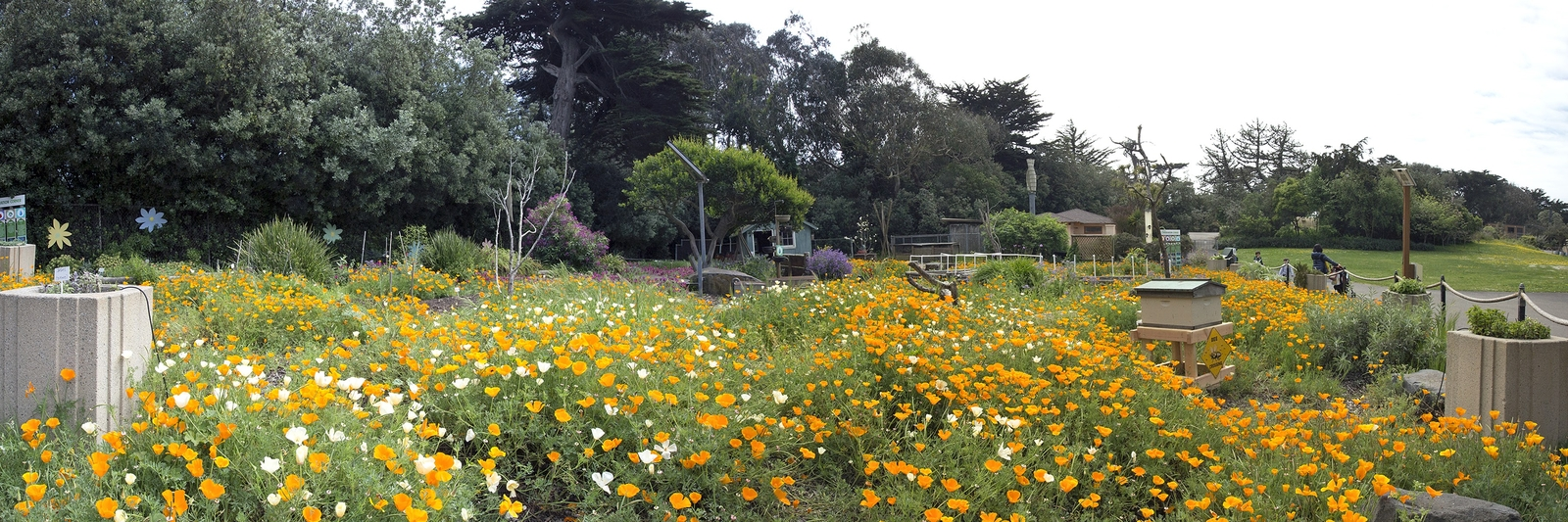 The San Francisco Zoo Gardens San Francisco Travel Association Photo