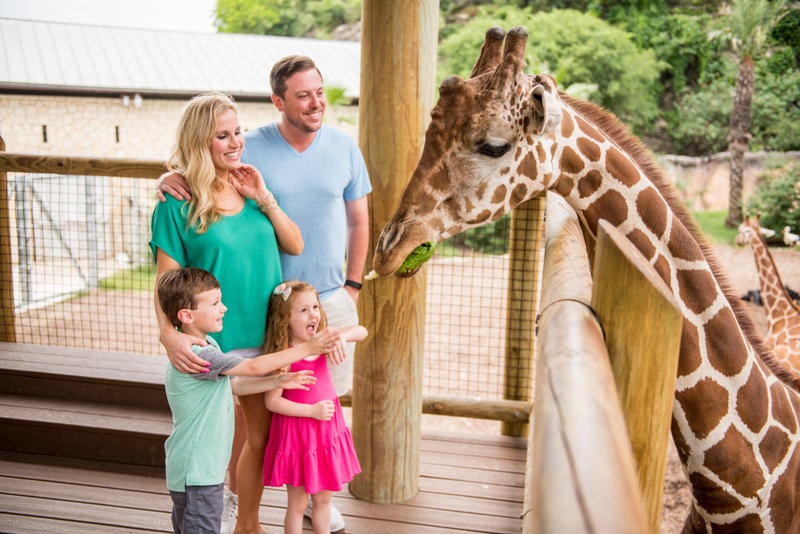 San Antonio Zoo Giraffe Feeding courtesy of visitsanantonio.com