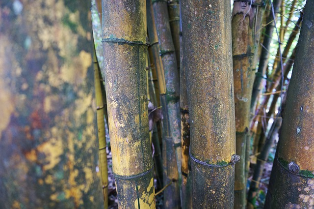 Hawaii Bamboo Pixabay Public Domain